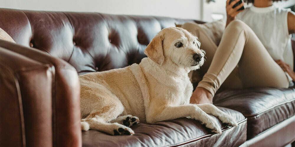 huisdieren meubels